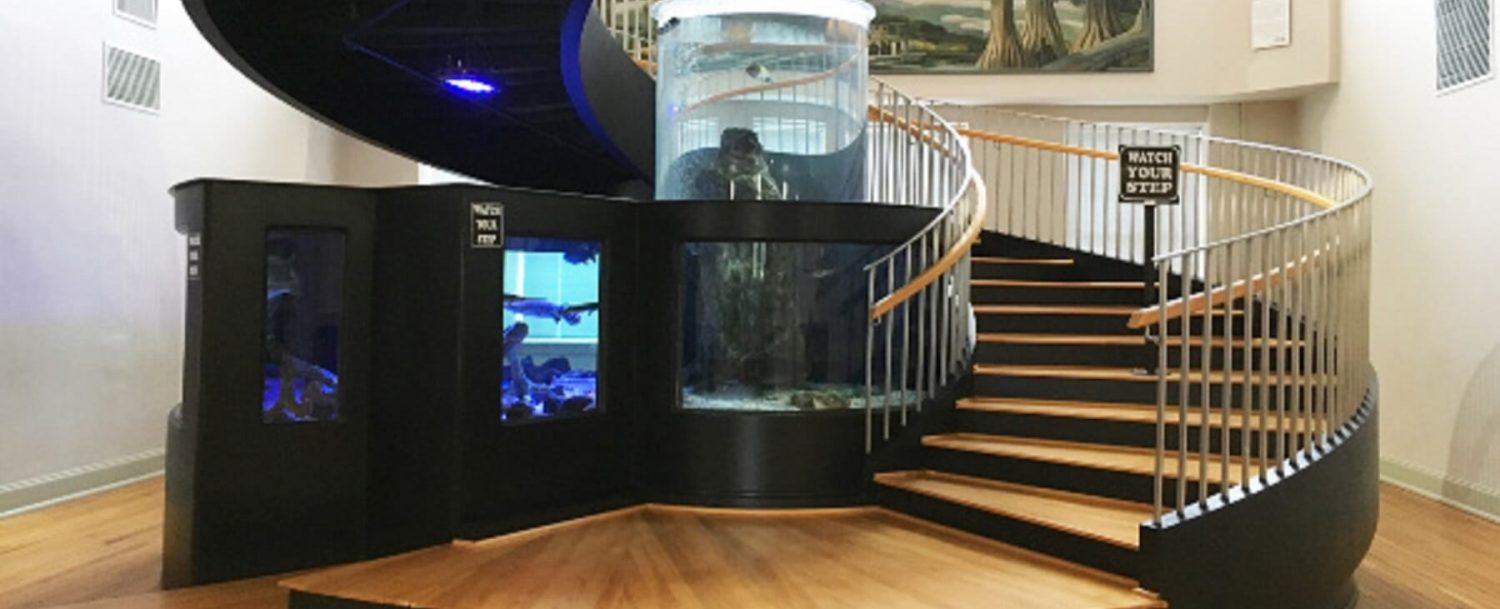 Horry-County-Museum-Beach-Gallery-Fish Tank