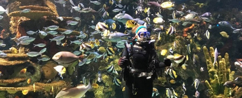 Ripleys Aquarium | diver in tank